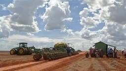 Fazendas do oeste de MT aceleram para concluir o algodão