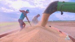 Soja continua liderando a produção agricula do Amapá, segundo o IBGE