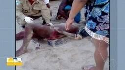 Homem é esfaqueado por vendedor de milho na Praia do Forno, em Arraial do Cabo, no RJ