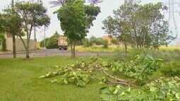 CPFL derruba árvores plantadas por moradores no Jardim das Torres em São Carlos
