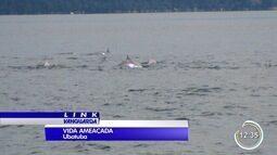 Morte de golfinhos no litoral norte preocupa pesquisadores