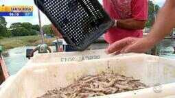 Seca contribui para pesca de camarão no Sul do RS