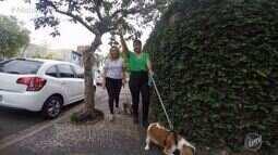 Rafael Ristow e Cris Ikeda aprender cuidados específicos para cães