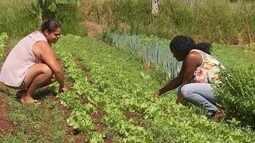 Produtores rurais economizam com compras coletivas em Arealva e Agudos