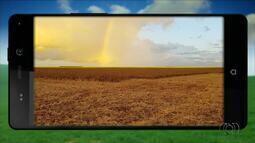 Telespectadores enviam fotos das lavouras e colheitas no interior do Tocantins