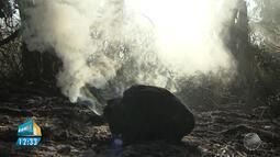 Incêndio em área de Mata Atlântica e tradição a São José são os destaques da previsão