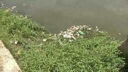Esgotos clandestinos causam mortandade de peixes em lagoa no Ceará