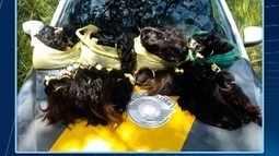 Polícia aborda homem que transportava cabelos humanos sem nota fiscal