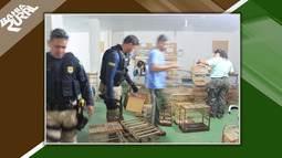 Força tarefa combate criação e venda de animais silvestres e extração ilegal de madeira