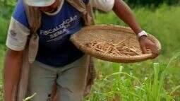 Produtores de Juazeiro já iniciaram a colheita de feijão