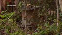 Parte 2: Em Rondônia, produtora transforma sítio em recanto para abelhas