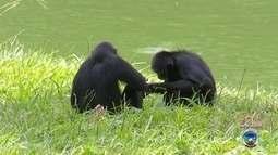 Corregedoria confirma que macacos do zoo de Sorocaba eram afogados de propósito