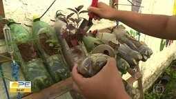 Moradores da Linha do Tiro criam horta comunitária e apostam em alimentação saudável