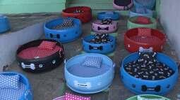 Artesão da Paraíba transforma pneus velhos em caminhas para cães e gatos