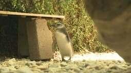 Centenas de pinguins são encontrados mortos em Ilha Comprida e Cananéia