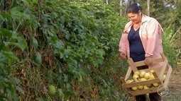 Na região sul do estado, pequenos produtores diversificam a produção com o maracujá