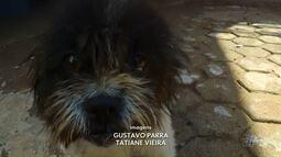 Cão espera pela saída do dono no pátio da delegacia de Cambé