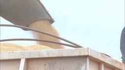 Mirante Rural mostra que agricultores contestam dados do IBGE sobre plantio da soja no Sul