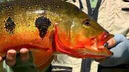 Pescaria e observação