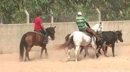 Peões se preparam para o Circuito Avapi de Vaqueijada na Expoapi