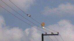 Distribuidora de energia fala sobre perigos em soltar pipa perto de fiação