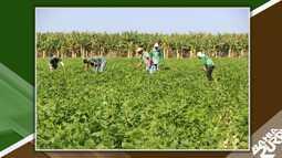 Jovens do oeste recebem treinamentos contra pragas agrícolas