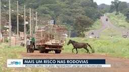 Entenda riscos de animais nas rodovias de Goiás