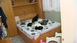 Aproveitando todo o charme do León, fomos procurar um lar pra gatinhos fofos!!!