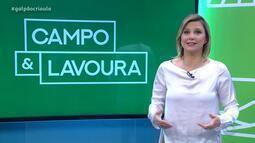 Gisele Loeblein comenta escolha da deputada Tereza Cristina como Ministra da Agricultura