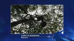 Piloto de paraglider é resgatado após acidente em Botucatu