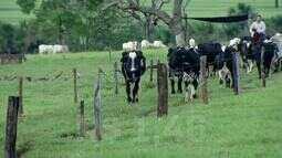Cooperativa subsidia produtores de leite no Triângulo Mineiro