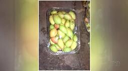 Moradores de Goianorte aumentam renda com a produção e venda da fruta mangaba