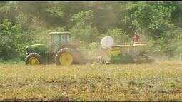 Produtores otimistas com a safra da soja aumentam a área de plantação para o ano de 2019