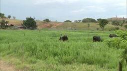 Fazenda em Fernandes Tourinho, no Leste de Minas, é modelo de produção sustentável