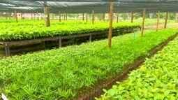 Parte 2: Em Rondônia, projeto ajuda florestar áreas degradadas