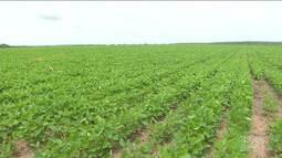 Agronegócio no sul do Maranhão podem aumentar as vendas no comércio de Balsas