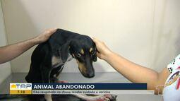 Cão resgatado após ser visto se arrastando na chuva recebe tratamento em Santarém