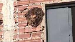 Inter TV Rural tira dúvidas de telespectador que quer saber mais sobre enxame de abelhas