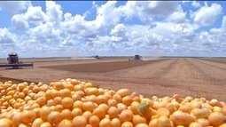 A colheita da soja em terras indígenas de MT