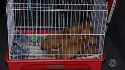 Mais de 100 cães são resgatados de canil interditado em Piedade