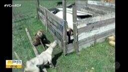 Justiça mantém condenação de prefeito de Santa Cruz do Arari por morte de cães