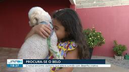 Menina faz cartazes com desenho à mão e encontra cão desaparecido em Boa Vista