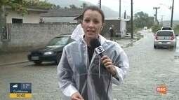 Três quedas de árvores são registradas em Balneário Camboriú após chuva