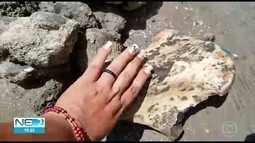 Agricultores encontram ossada de preguiça de milhões de anos atrás no Agreste de PE