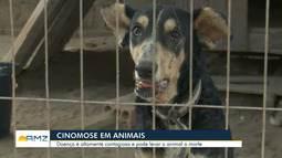 Cuidadora de cães alerta sobre os perigos da cinomose aos animais em Roraima