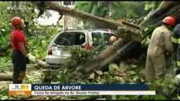 Carro é atingido após queda de árvore na avenida Doutor Freitas