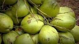 Confira a 5ª reportagem da série 'Cerrado: O roteiro das frutas'