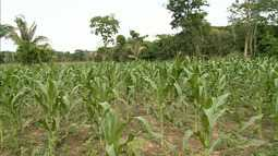 Pequenos agricultores aumentam produção em Davinópolis