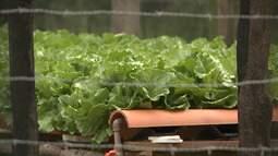 Professor desenvolve projeto para reduzir custos e melhorar o cultivo de horatliças