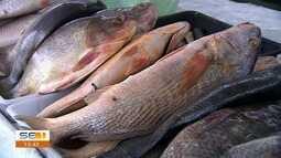 Cresce a procura por peixes na Semana Santa